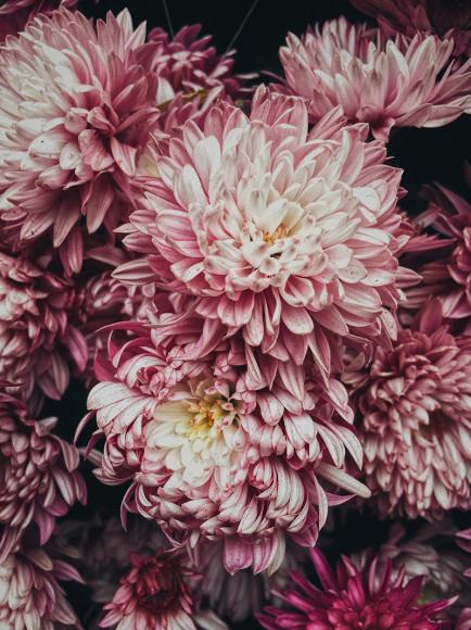 Номинация «Цветы», 2 место, Chikeung Poon