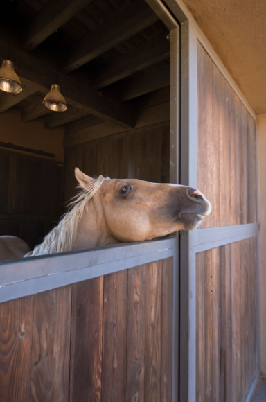Конюшни на ранчо Серро-Пелон