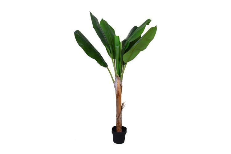 Банановое дерево Amanda B, 12990 руб. («Стокманн»)