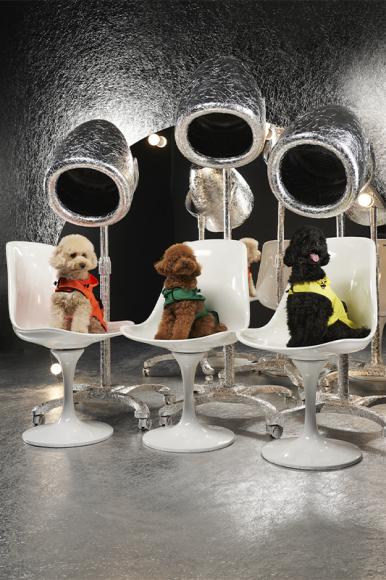 Moncler X Poldo Dog Couture