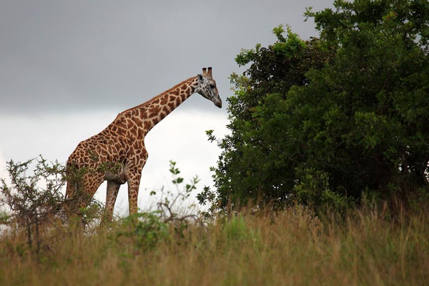 Фото: Forster/ullstein bild via Getty Images