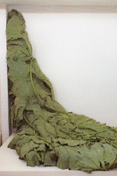 «Лавина белокопытника», 1994