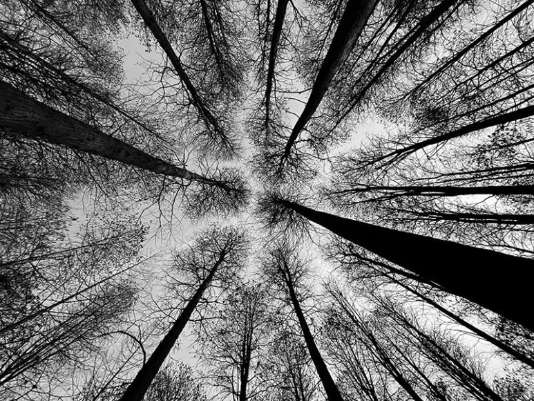 Номинация «Деревья», 2 место,Wei Xiong