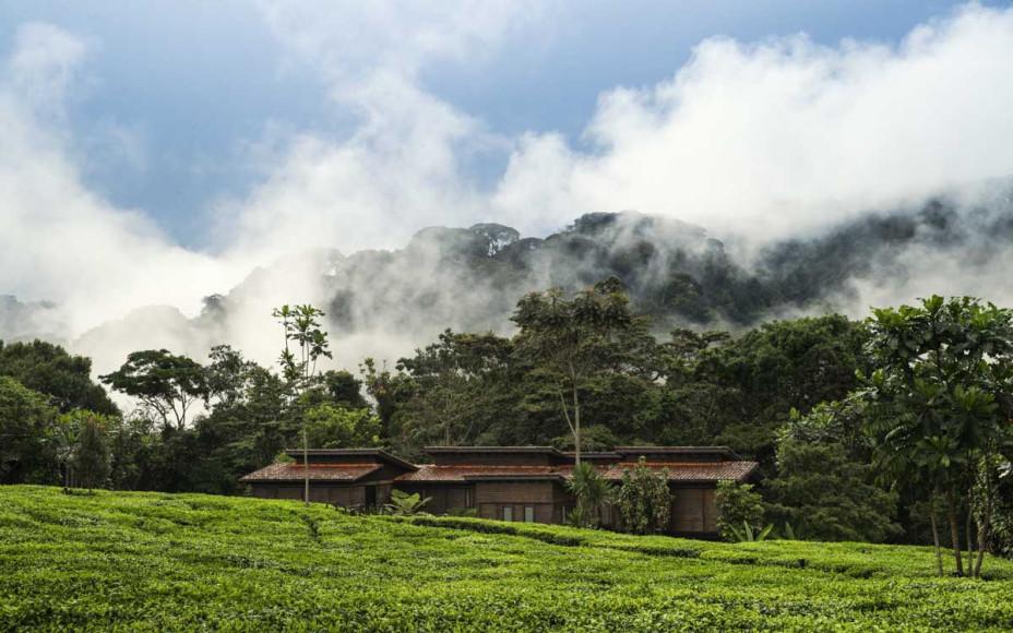 Курорт One&Only Gorilla's Nest в Руанде