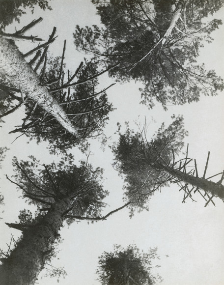 Александр Родченко. «Сосны». Пушкино. 1927