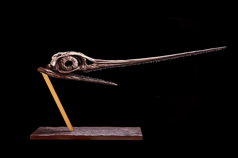 Череп ихтиозавра, галерея Theatrum Mundi