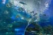 Фото:сайт океанариума
